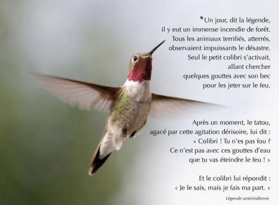 image colibri.jpg (47.4kB)