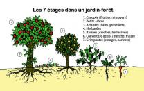 Foret Lien vers: ForetComestible