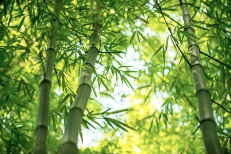 emballagebiounargumentcommercialaupresde_plantes-bambous.png