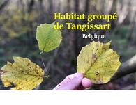 hgtangissart_vignette_hg_tangissart_petite.jpg