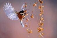 jeueursauray_bird-1045954_1920.jpg