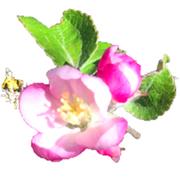 linspiration_fleur-jds.png