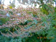 moinsdargentpourplusdevivant_plante2.jpg