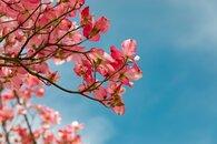 mycellium_fleurs-cerisier-formation-ortho.jpg