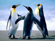 projetbird_penguins.jpg