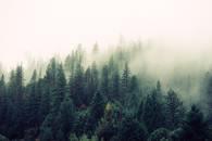 ubuntu_fog-foggy-forest-4827.jpg