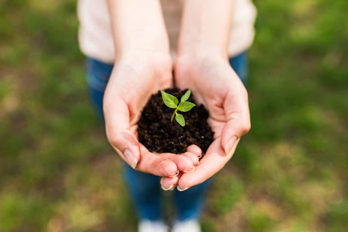 Une femme tient dans ses mains une pouce de plante dans de la terre