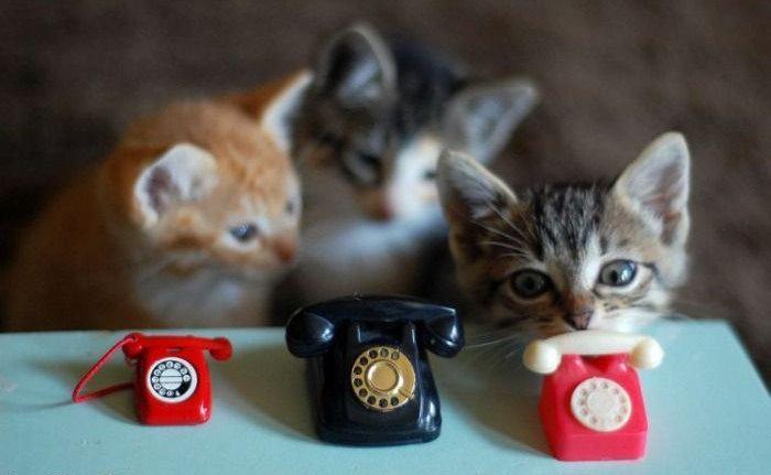 chatons tel