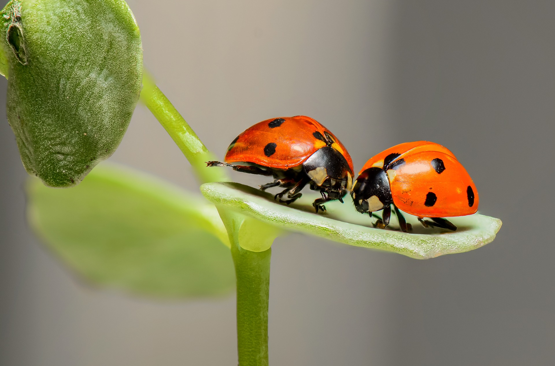 image ladybugs1593406_1920.jpg (0.4MB)