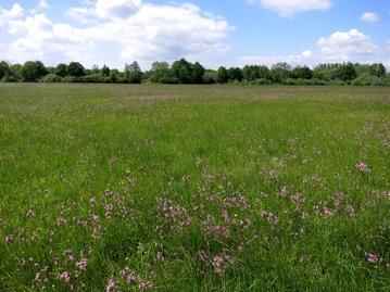 image prairie.jpg (0.1MB)