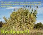 resilience1_resilience-1.jpg